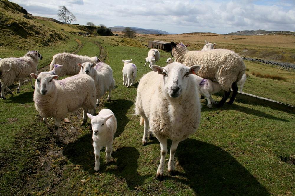 Να δοθεί προτεραιότητα στη σύγχρονη κτηνοτροφία